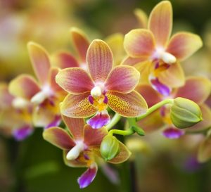 Water for orchids
